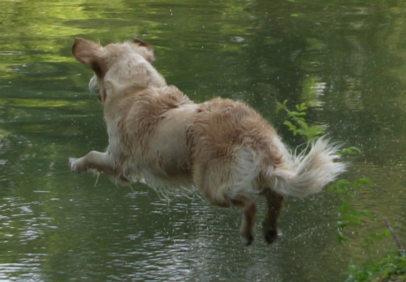 Water Jump!