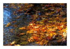 Water side in Autumn