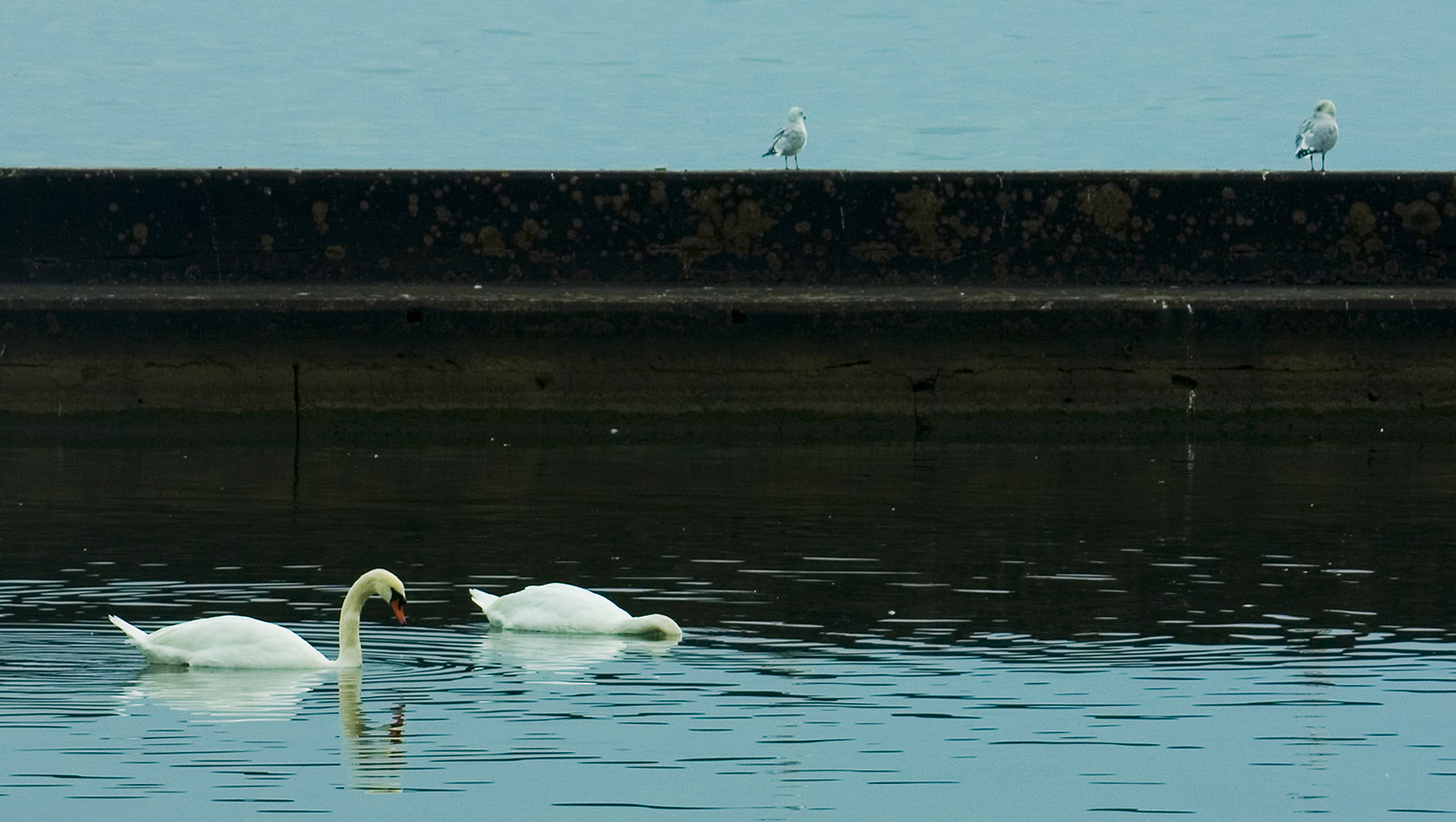 WATERBIRDS AT LAKE ONTARIO
