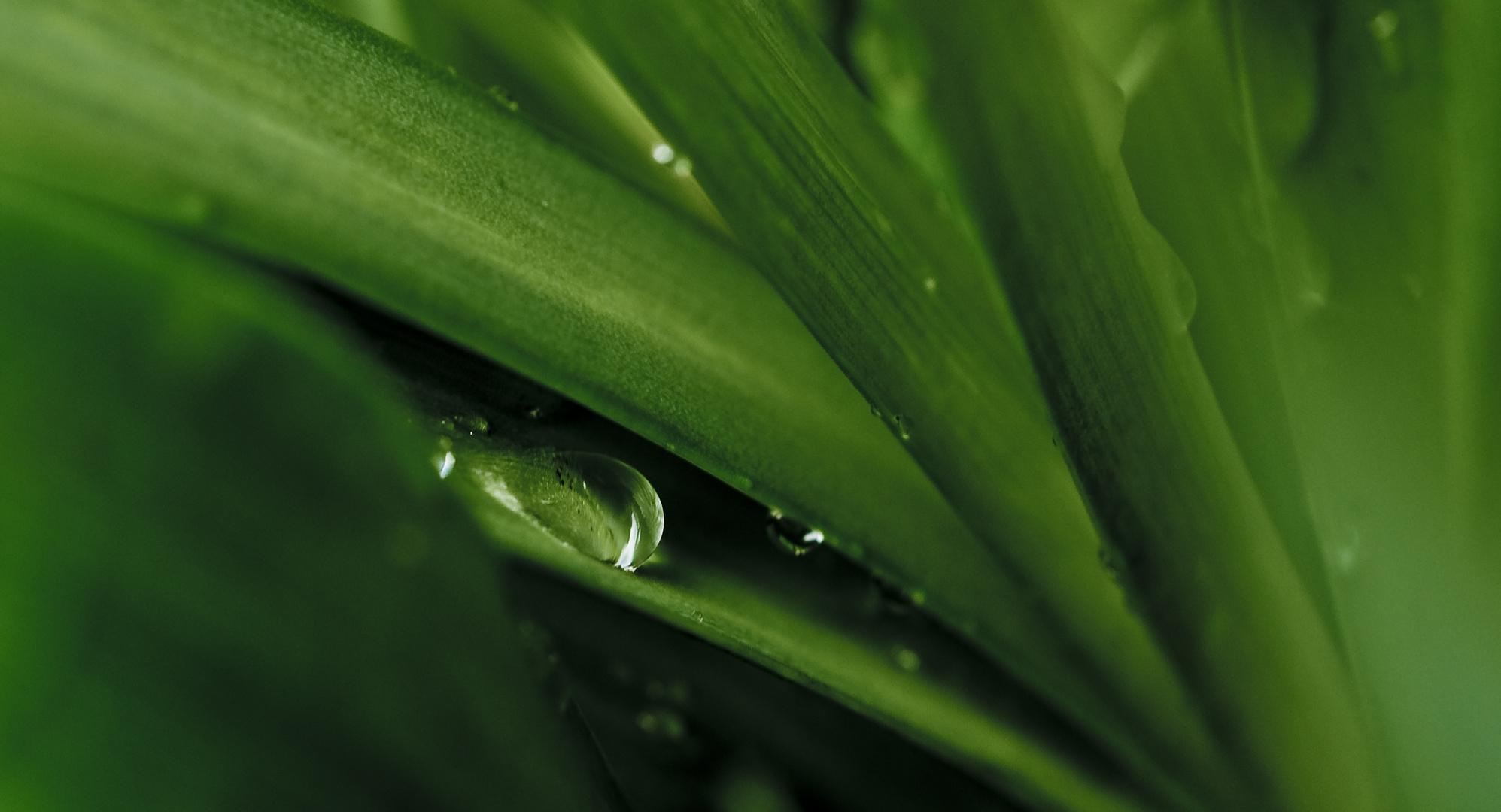 water_drop_plant