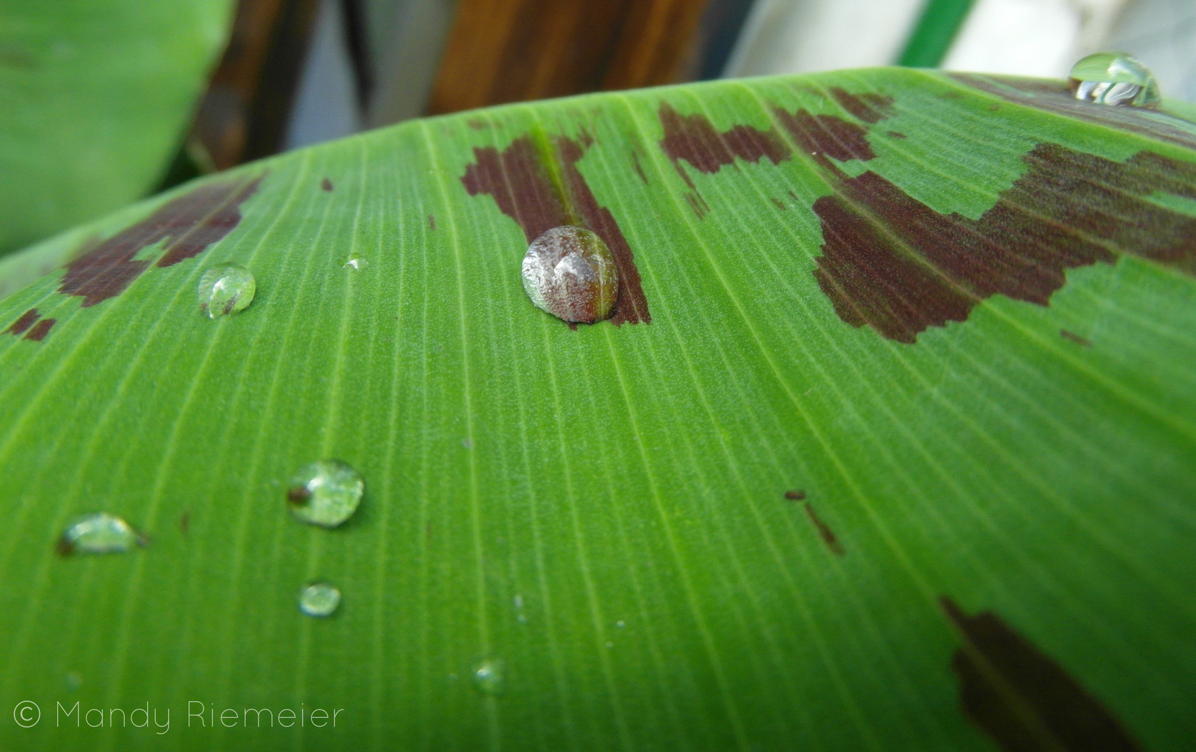 Waterdrops bubbling on a leaf