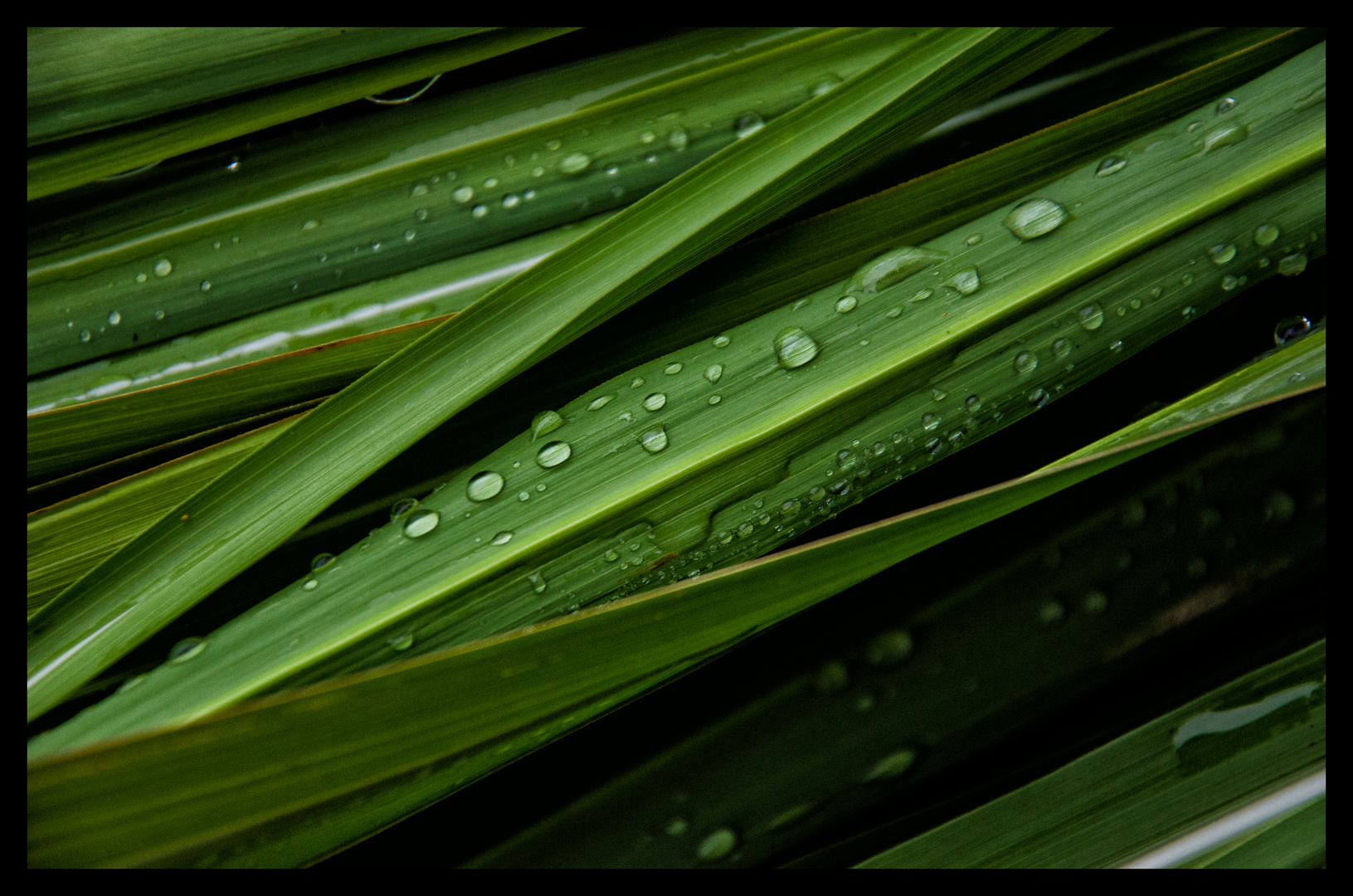 Waterdrops on green leaves No.1