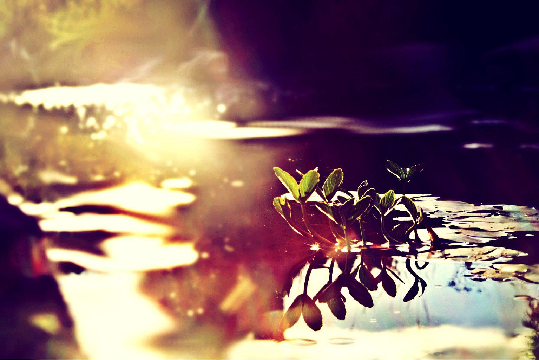 watery scene