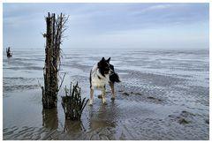 Watten Hund ..