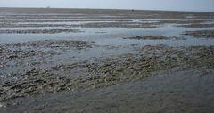 Wattenmeer II