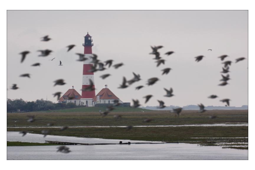 Wattvögel am Westerhever Leuchtturm