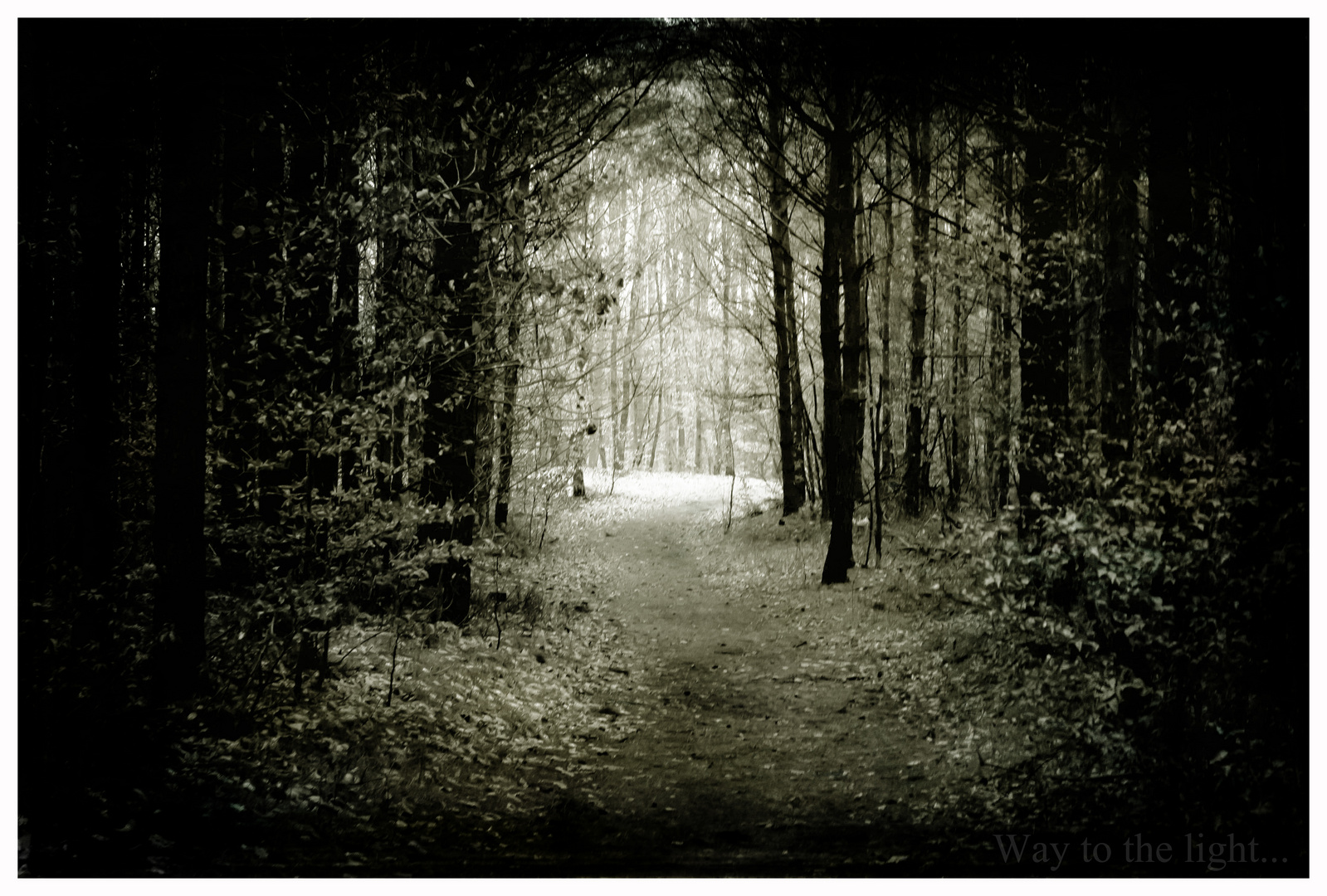 Way to the light.....