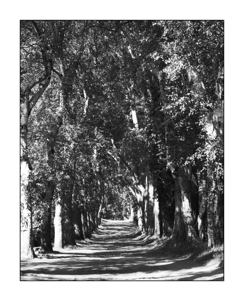 way you walk