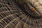 Web.... New Dimension!
