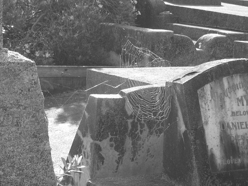 Web of death    /X(oo)/X