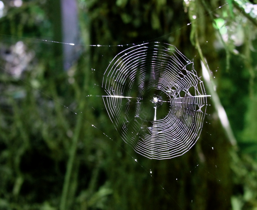 Web_Green