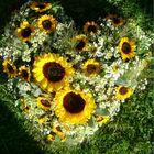 wedding sunflower