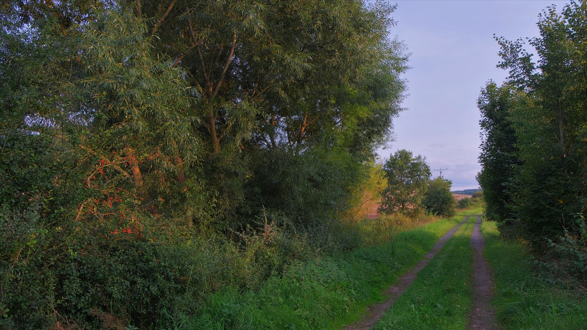 Weg am See (camino al lado del lago)