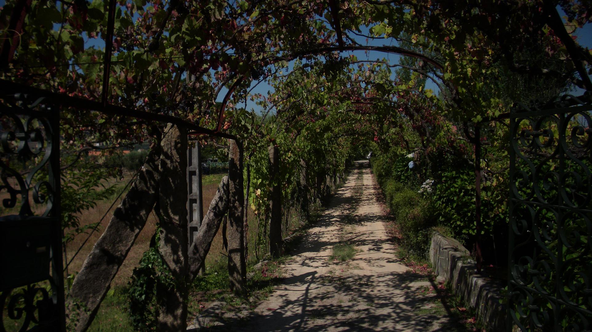 Weg des Rotweins