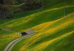 Weg durch Frühling...