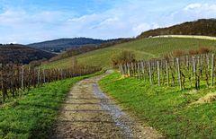 Weg im Steinberg