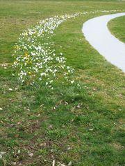 Weg in den Frühling