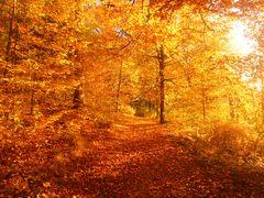 Weg in den Herbst hinein