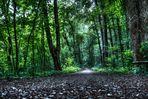 Weg in den Wald oder auch Waldweg