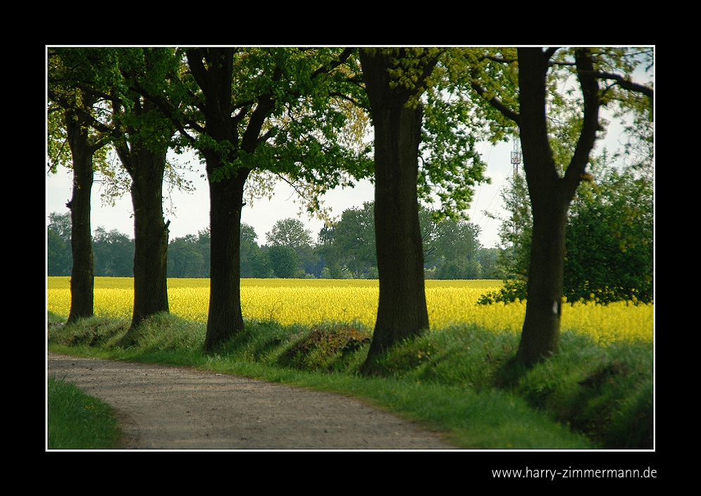Weg ins Gelbe