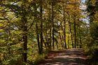 Weg mit Baumreihe