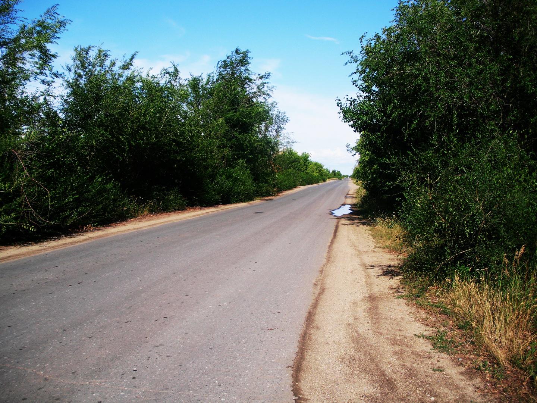 weg zum garten foto & bild | landschaft, wege und pfade, straße