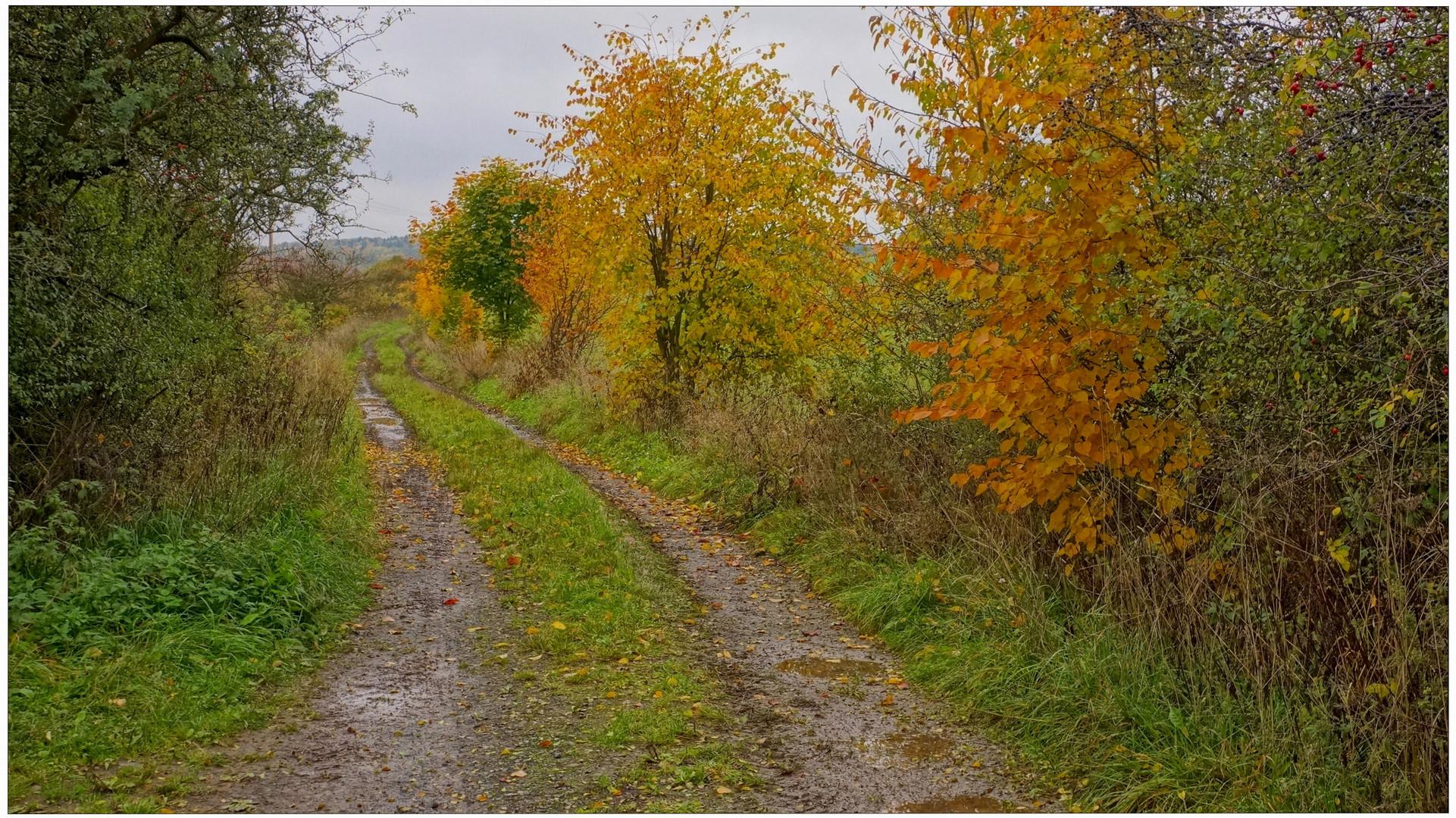 Weg zum See II (camino al lago II)