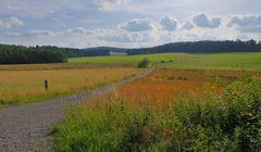 Weg zum Wald (camino al bosque)