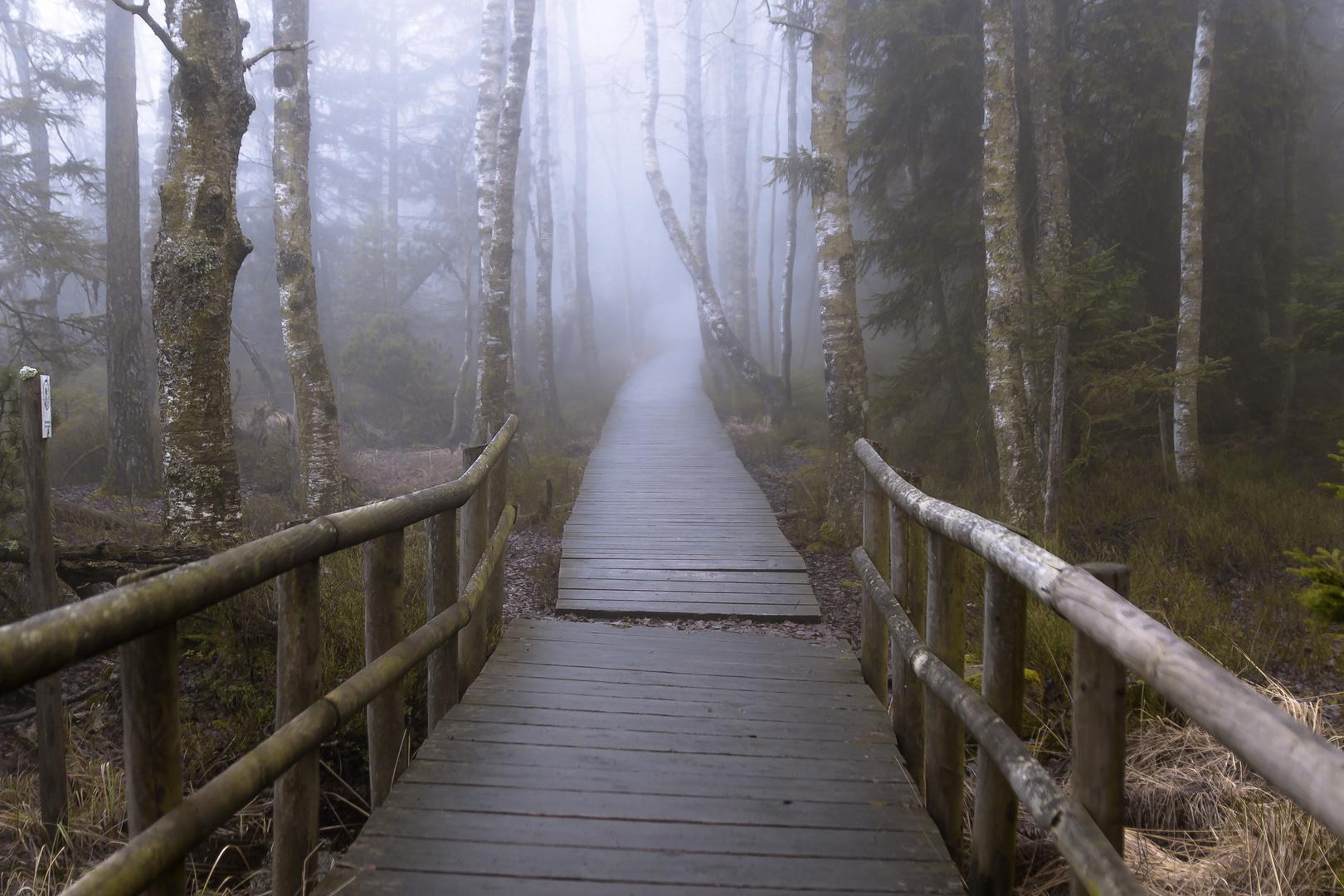 Weg zum Wildsee Kaltenbronn