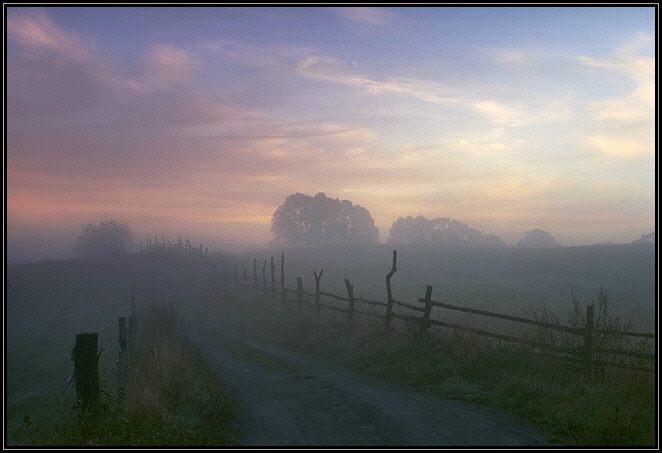 Weg zwischen Weiden im Morgennebel