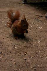 Wegbegleiter - das kleine Eichhörnchen