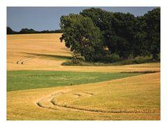 Wege durch Feld...