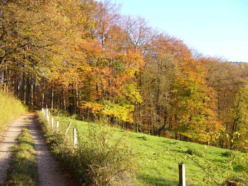 Wege im Herbst