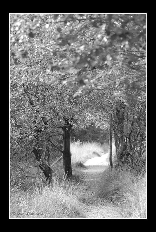 Wege im Hohen Venn (05278)