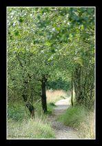 Wege im Hohen Venn in Farbe (05278)