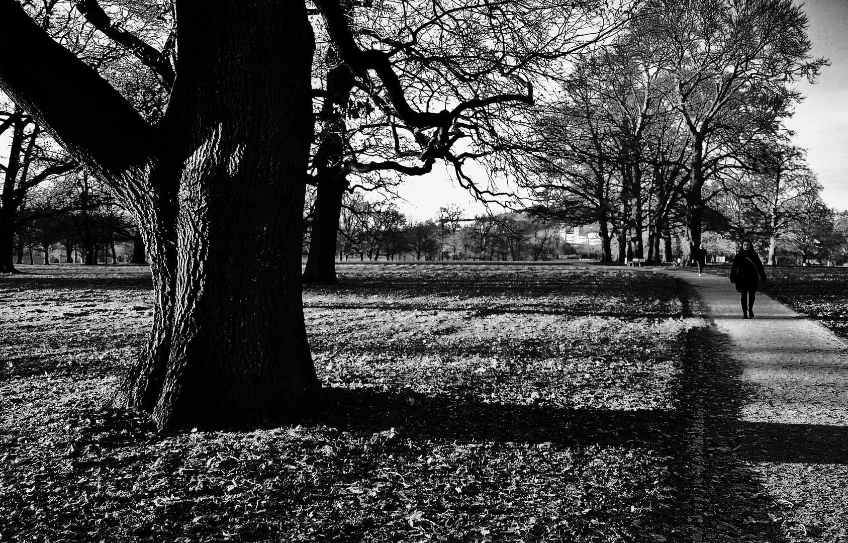 Wege im Rosensteinpark