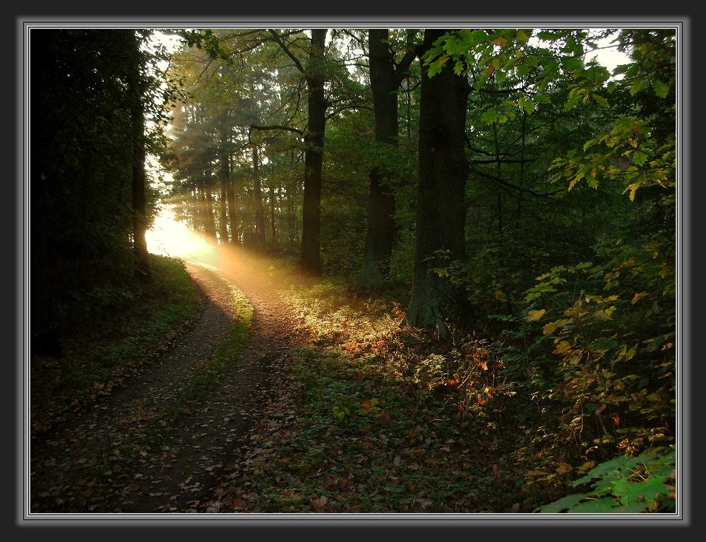 Wege ins Licht....