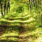 Wege zum Moor 1