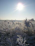 Wegensrand im Winter