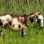 "Wehe, du sagst: ""Olle Kuh"" zu mir"