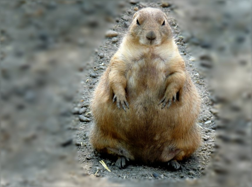 Wehe es sagt hier einer, ich wär zu dick.