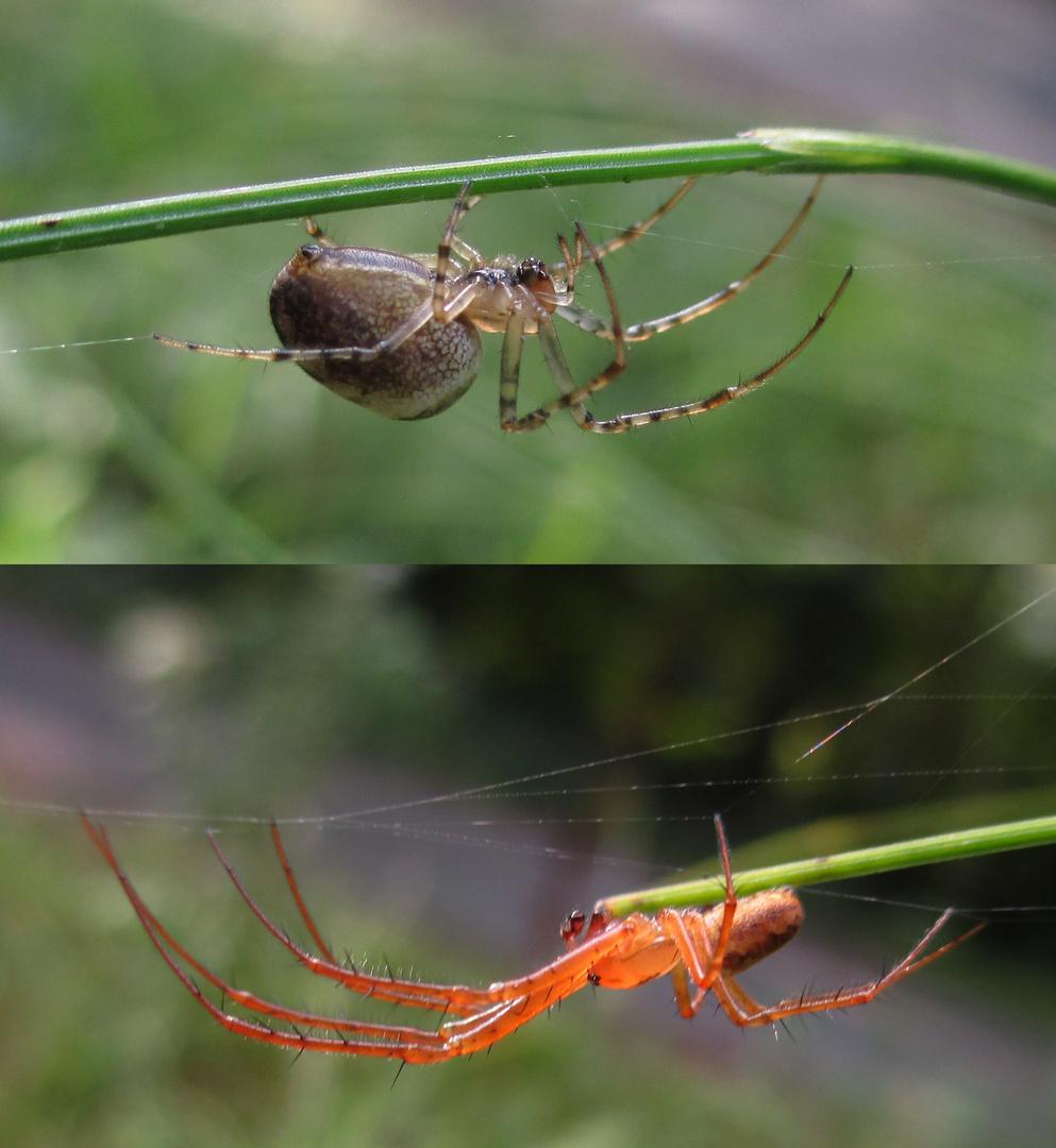 Weibchen und Männchen 2