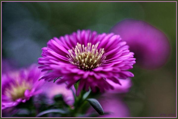 Weiche Blütenkissen*