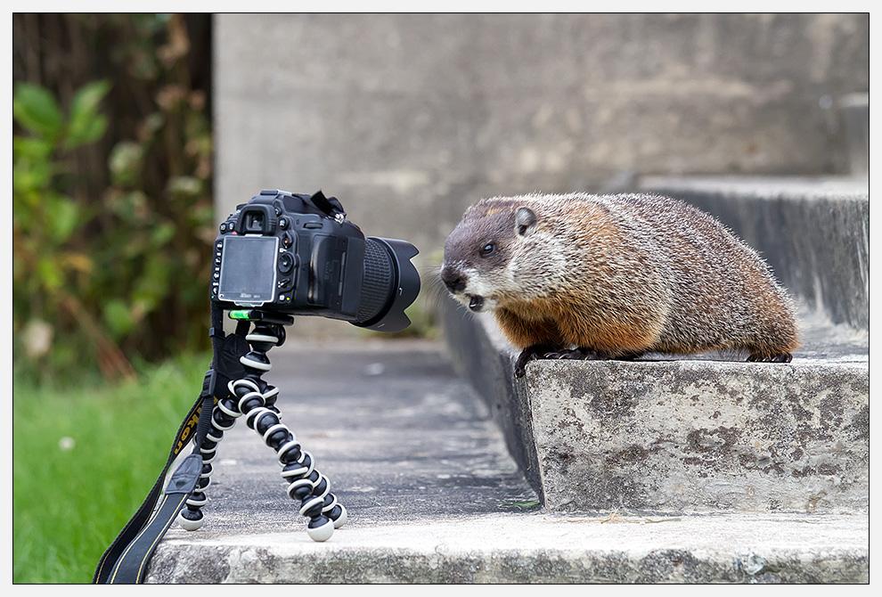 Weiche zurück, Nikon!