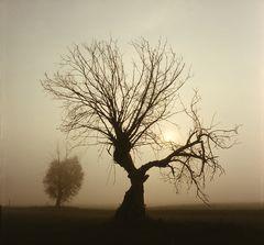 Weide im Morgennebel