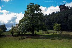 Weidelandschaft beim Bärenbrunnerhof