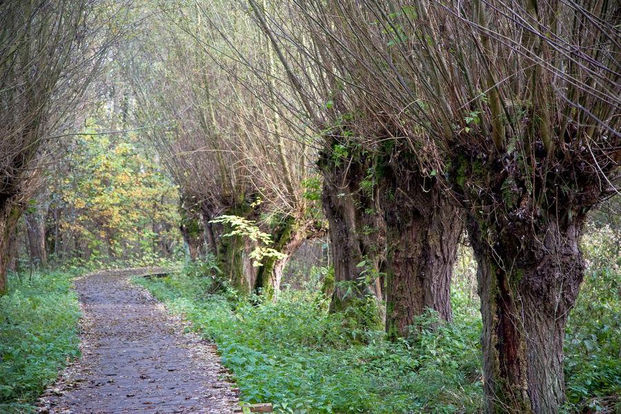 Weiden im Großen Torfmoor
