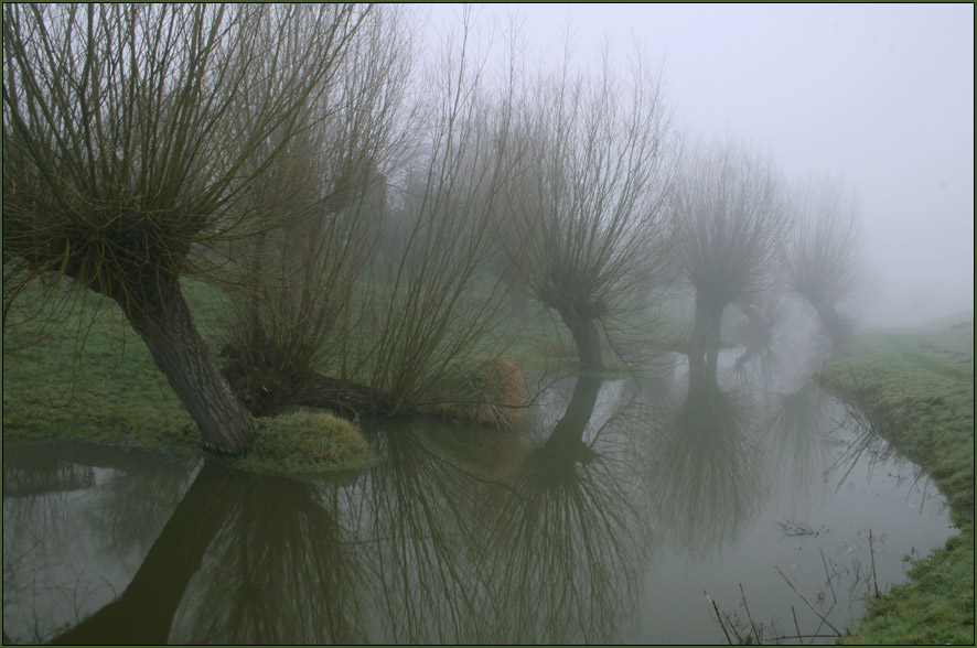 Weiden im Nebel ...