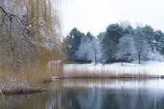Weidenbaum am See