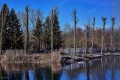 Weiher mit Baumbestand im Vorderen Altrhein